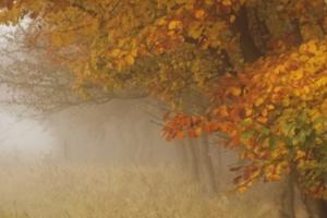 herfst-afbeelding